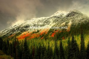 Red vine maple clearing fall storm Stevens pass Leavenworth Washington