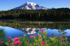 1 August at reflection Lakes springtime at Mount Rainier National Park