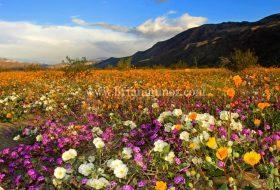 Borrego Springs – Anza Borrego Desert State Park