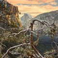 First view of the Valley winter morning on HWY 41 Wawona road Yosemite National Park