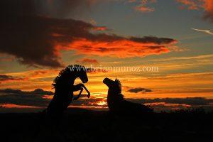 Sunrise and Horse sculptures Borrego Springs,sculptures by Ricardo Breceda